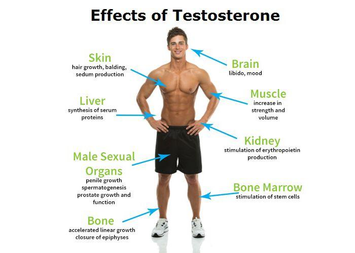 ciclo de testosterona efectos